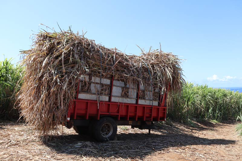 Sugarcane pile on truck - Reunion Island