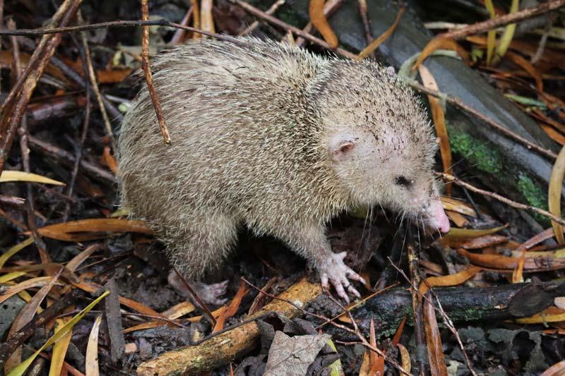 Trou de Fer Hike - Forêt de Bébour-Bélouve - Reunion Island - animal