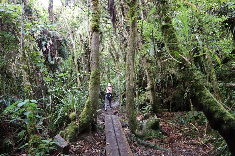 Trou de Fer Hike - Forêt de Bébour-Bélouve - Reunion Island - forest trail