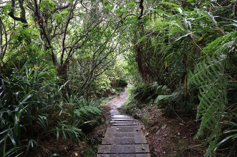Trou de Fer Hike - Forêt de Bébour-Bélouve - Reunion Island - trail