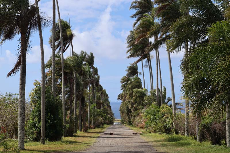 Domaine du Grand Hazier Vanilla Plantation- Reunion Island