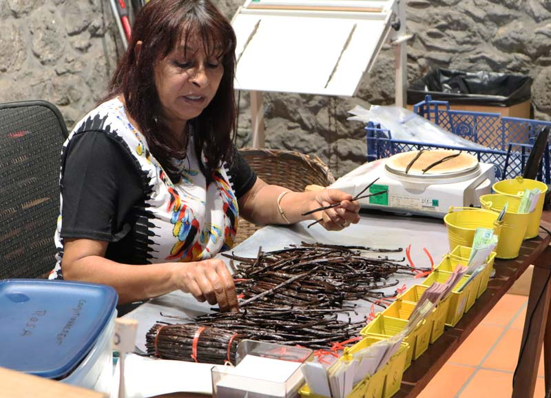 Sorting vanilla in Domaine du Grand Hazier Vanilla Plantation - Reunion Island