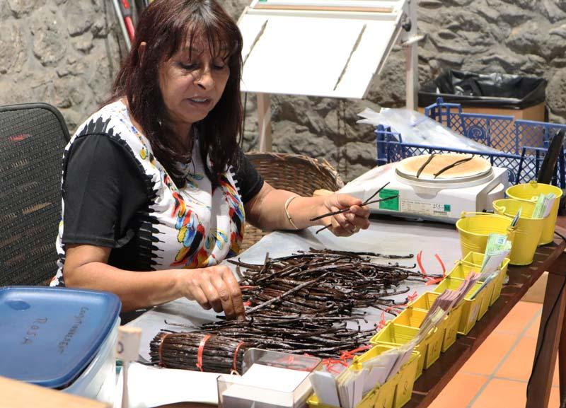 Sorting vanilla in Domaine du Grand Hazier Vanilla Plantation- Reunion Island