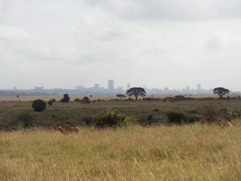 Nairobi National Park - kenya