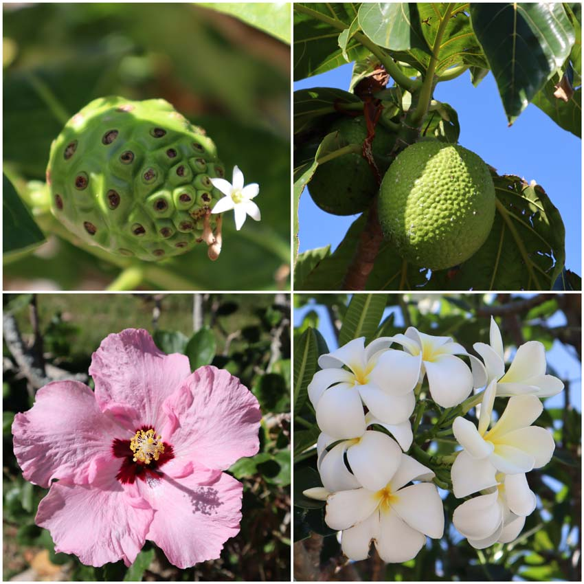 Flowers and fruits in Maupiti French Polynesia