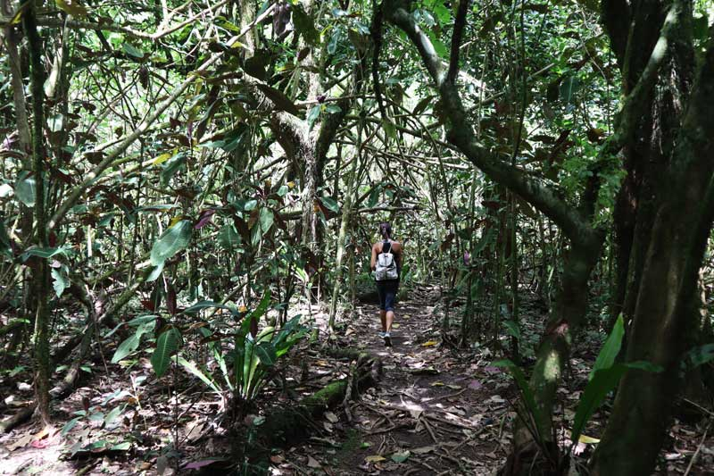 Walking in rainforest - Tautira Valley Hike - Tahiti - French Polynesia