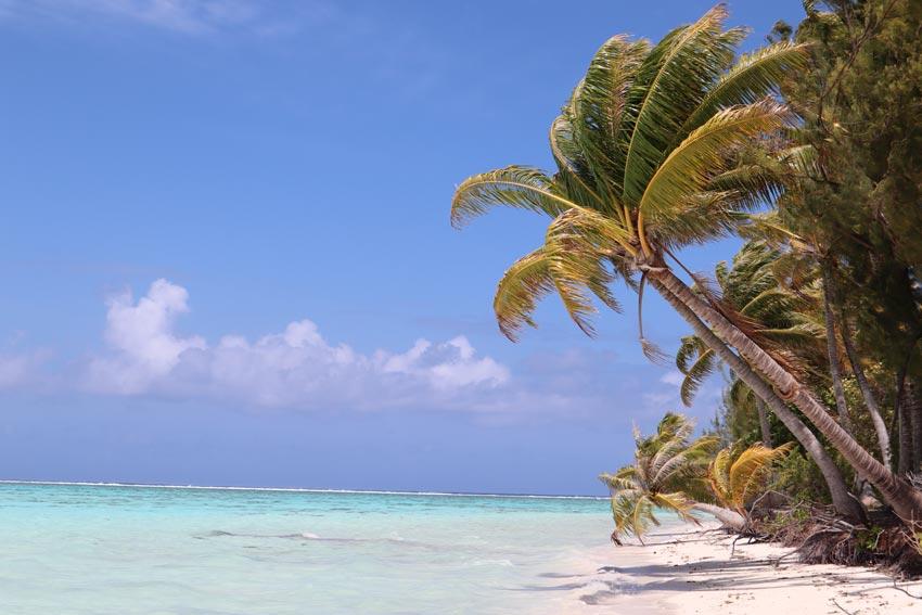 palm tree on white sane beach - motu auira - Maupiti - French Polynesia