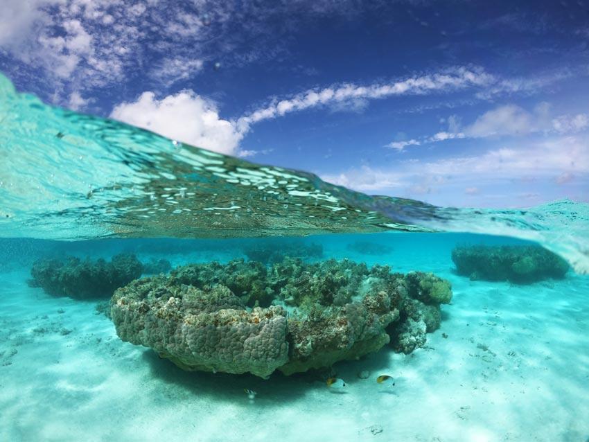 snorkeling - motu auira - Maupiti - French Polynesia