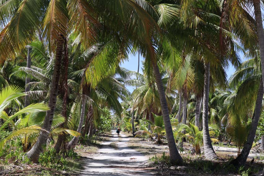 man walking in coconut grove - tikehau - french polynesia