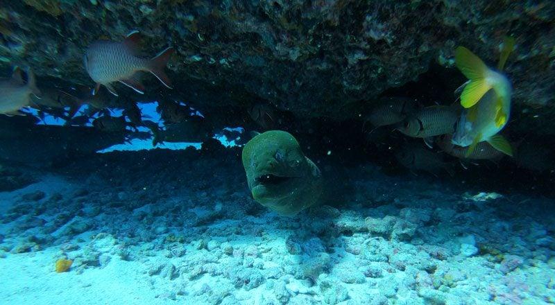 scuba diving tikehau atoll - french Polynesia - moray eel