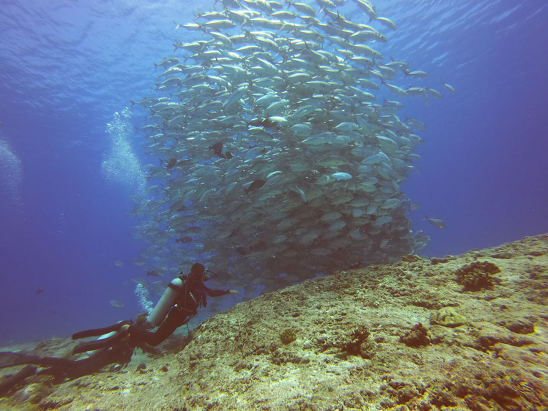 scuba diving tikehau atoll - french Polynesia - school of fish
