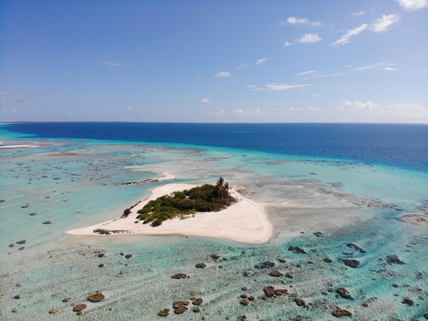 small islet with coconut palm - tikehau - french polynesia