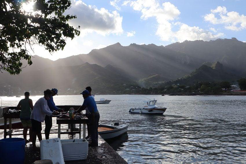 fishermen cleaning fish Taiohae - nuku hiva - marquesas islands - french polynesia