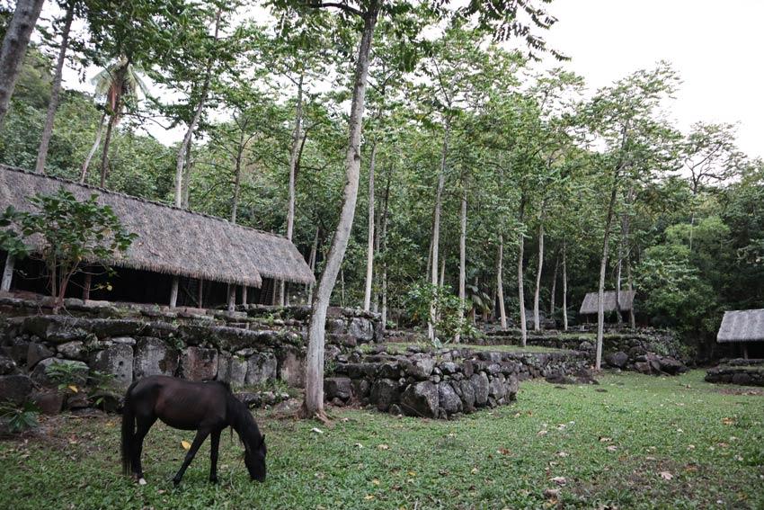 horse in Kamuihei archeological site - nuku hiva - marquesas islands - french polynesia