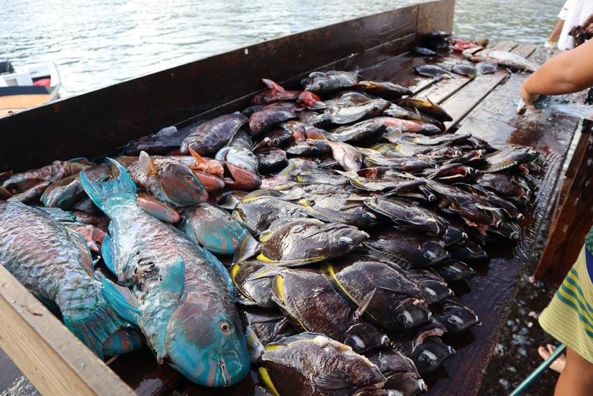 saturday fish market 2 - nuku hiva - marquesas islands - french polynesia