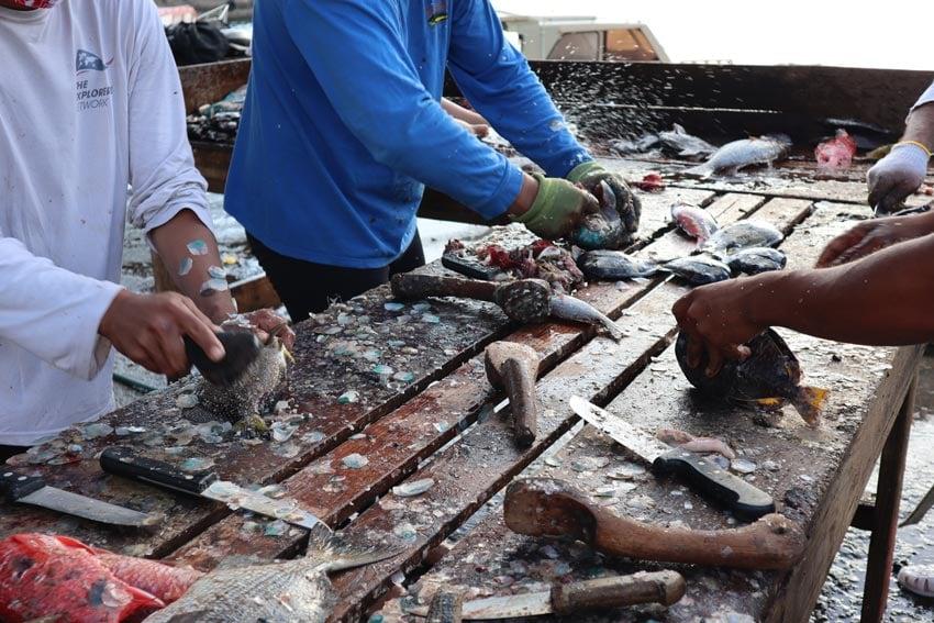 saturday fish market - nuku hiva - marquesas islands - french polynesia