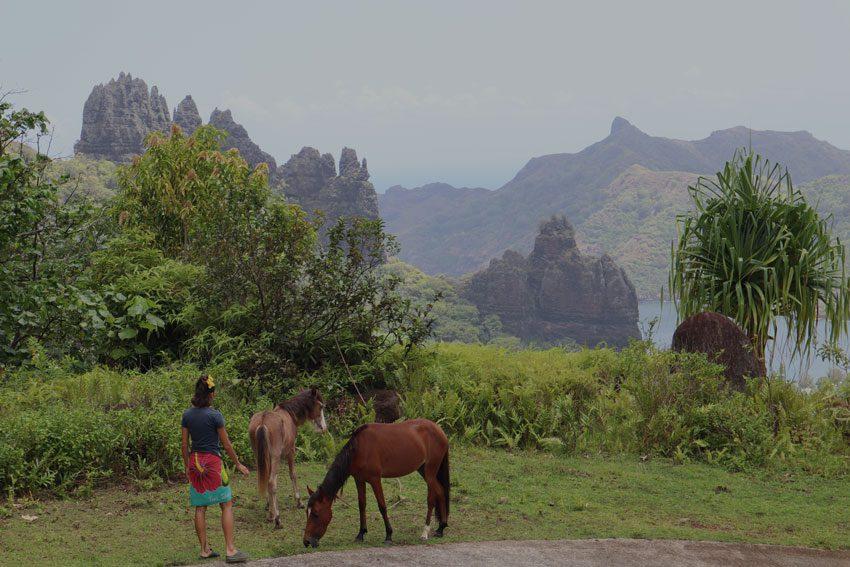 wild horses at Hatiheu lookout - nuku hiva - marquesas islands - french polynesia