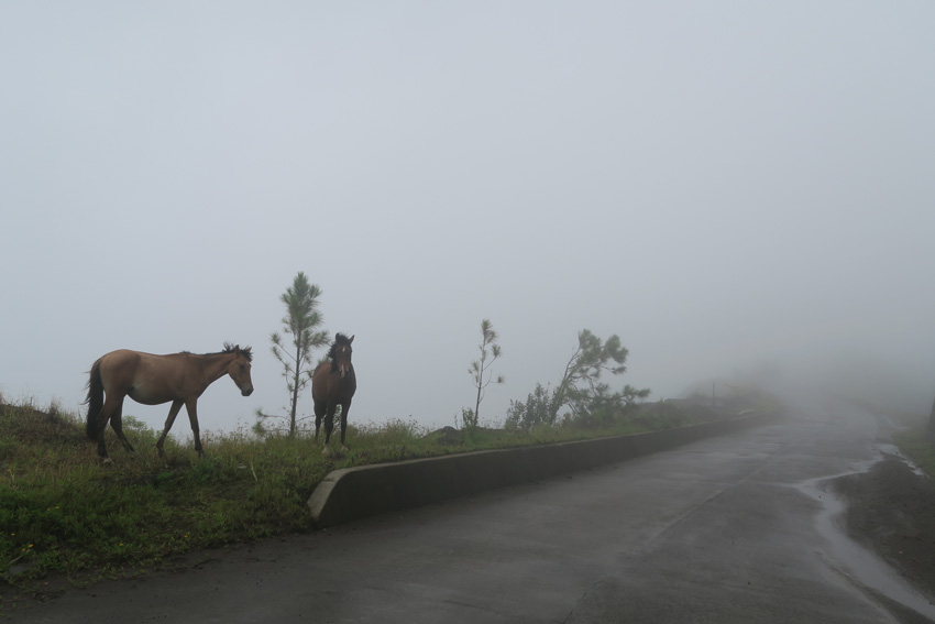 Horse in clouds Nuku Hiva Marquesas Islands French Polynesia