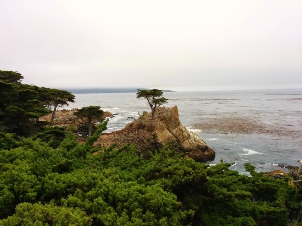 Lone Cypress Tree 17 Mile Drive