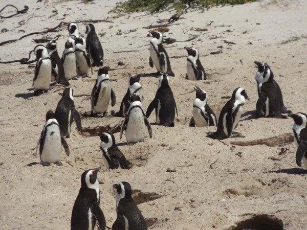 Boulders Beach Western Cape