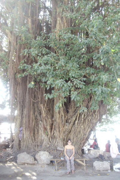 The 'Big Tall Tree' Stone Town Zanzibar