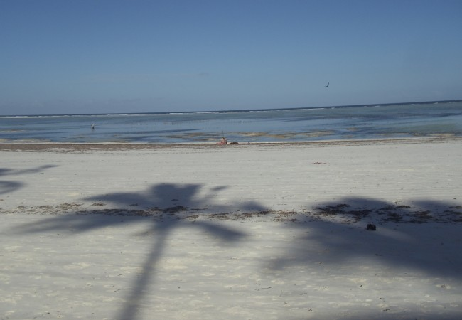 Matemwe Tropical Beach Zanzibar travel