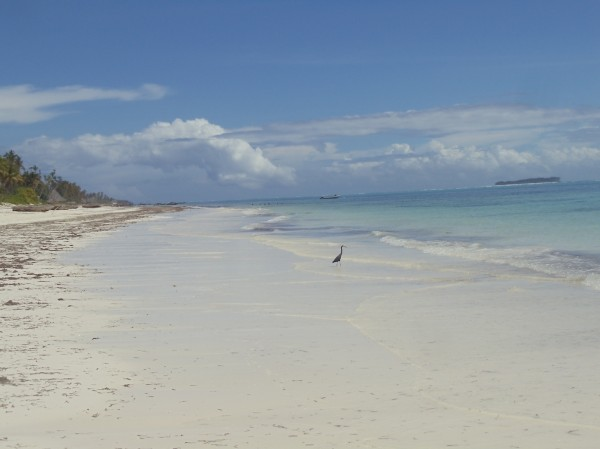 Matemwe Tropical Beach Zanzibar travel