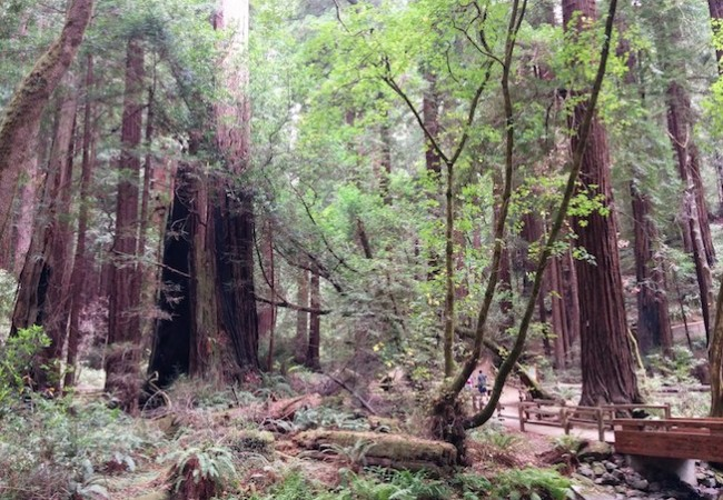 Muir Woods California