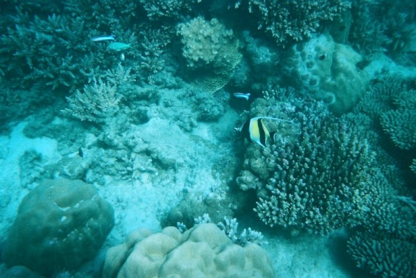 Snorkeling Chumbe Island Zanzibar